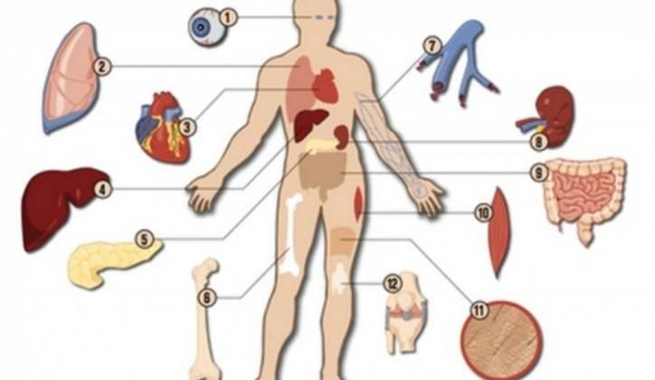 донирање органа